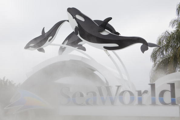 Orlando「Killer Whale Kills Trainer Before Show At SeaWorld」:写真・画像(11)[壁紙.com]