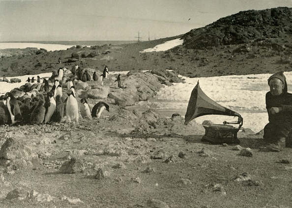 Gramophone「Penguins Listening To The Gramophone During The Summer」:写真・画像(14)[壁紙.com]