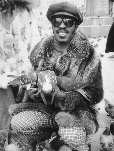 ファンキー「Stevie Wonder」:写真・画像(17)[壁紙.com]