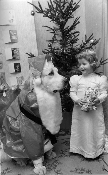 動物「Festive Dog」:写真・画像(19)[壁紙.com]