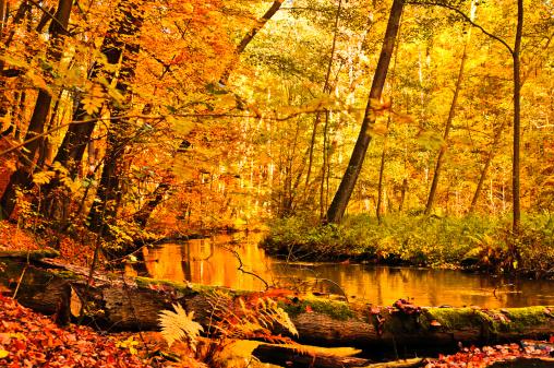 落葉樹「秋に自然の小川」:スマホ壁紙(19)