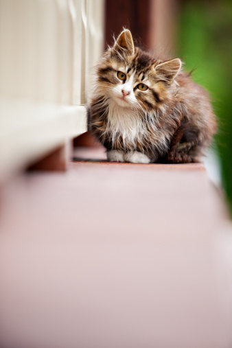 Mixed-Breed Cat「A small brown and white kitten sitting on a ledge」:スマホ壁紙(8)