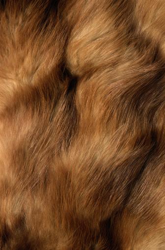 ふわふわ「Mink Fur」:スマホ壁紙(3)