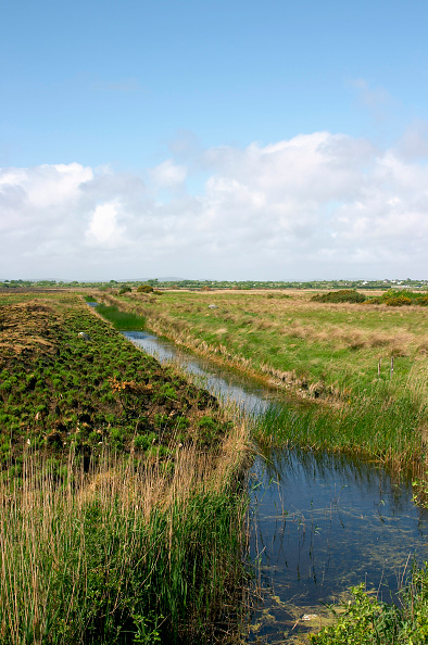 Grass「Drainage ditch in bog, Co Galway, Ireland」:写真・画像(17)[壁紙.com]