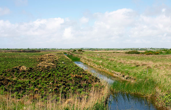 Grass「Drainage ditch in bog, Co Galway, Ireland」:写真・画像(9)[壁紙.com]