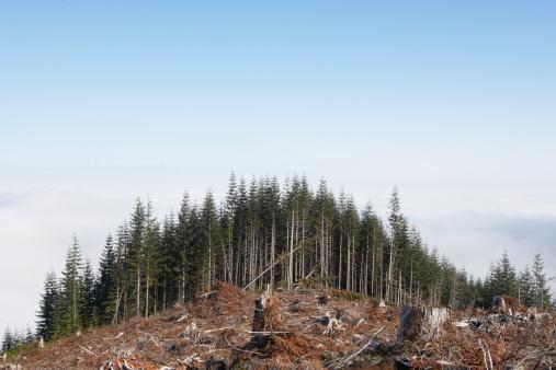 Destruction「Partly deforested hill」:スマホ壁紙(8)