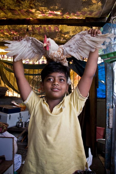 Hen「Slumdog Millionairre Child Stars Face Mumbai Slum Eviction」:写真・画像(12)[壁紙.com]