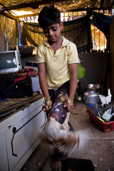 Hen「Slumdog Millionairre Child Stars Face Mumbai Slum Eviction」:写真・画像(13)[壁紙.com]