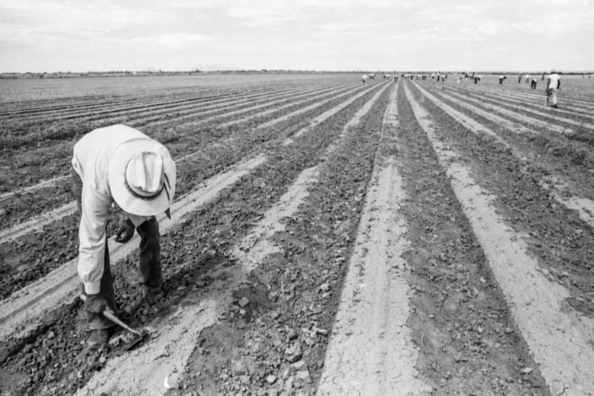 Arizona「Working In A Field」:写真・画像(14)[壁紙.com]