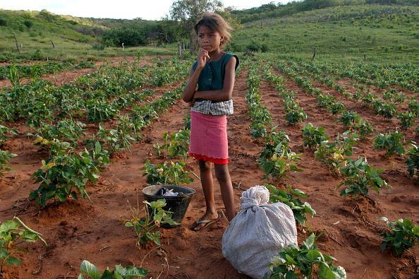 ラテンアメリカ「Brazil Initiates Program To Eradicate Malnutrition」:写真・画像(15)[壁紙.com]