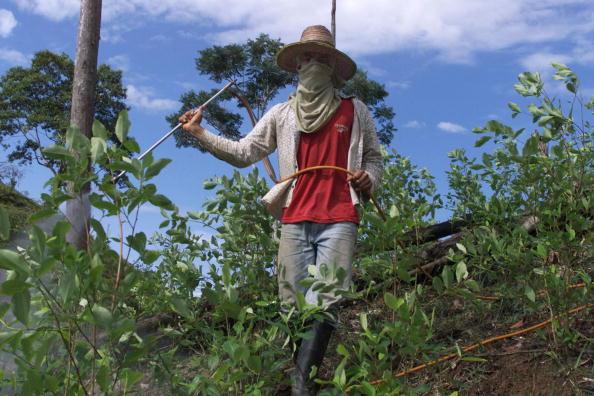 Cocaine「Coca Plantation Farmers」:写真・画像(5)[壁紙.com]