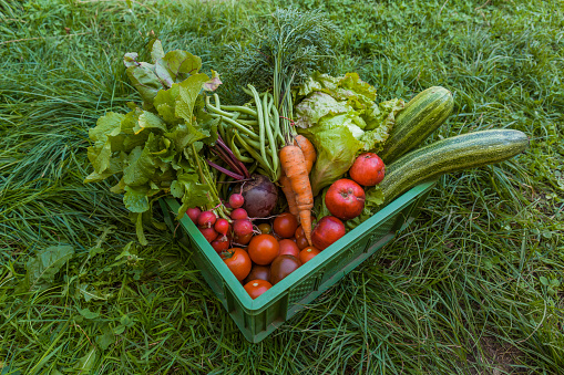 Carrot「Harvested mixed vegetables and apples in a box」:スマホ壁紙(1)