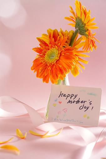 母の日「African chrysanthemum」:スマホ壁紙(0)