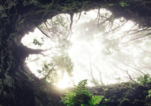 Madeira Island「Fairy Madeira Forest」:スマホ壁紙(16)