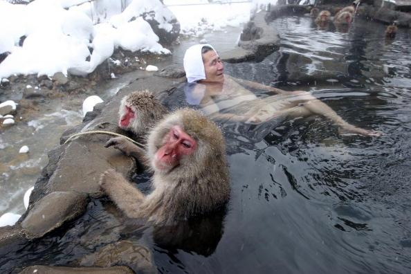 Primate「Japanese Macaques Bathe In Hot Springs」:写真・画像(4)[壁紙.com]