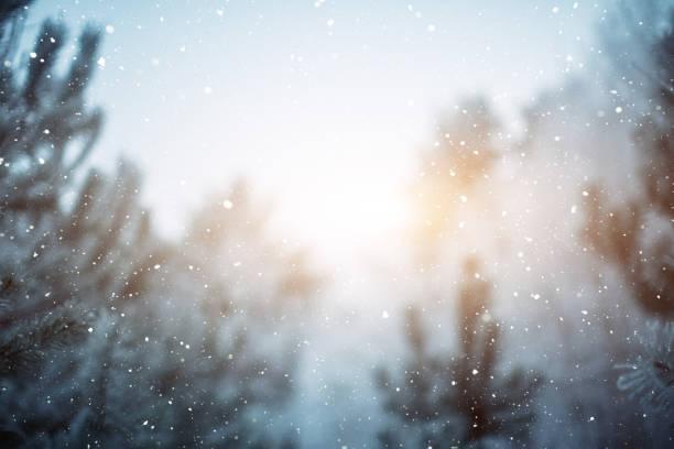 Winter scene - snowfall in the woods:スマホ壁紙(壁紙.com)