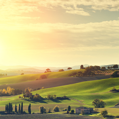 Vineyard「Tuscan landscape at sunset.」:スマホ壁紙(7)