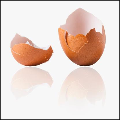 Animal Egg「Cracked egg shell」:スマホ壁紙(17)