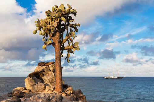 ガラパゴス諸島「Ecuador, Galapagos Islands, Santa Fe, Galapagos Sea Lion sleeping on a rock」:スマホ壁紙(0)