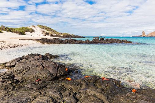 Galapagos Islands「Ecuador, Galapagos Islands, Santa Cruz, red rock crabs」:スマホ壁紙(14)