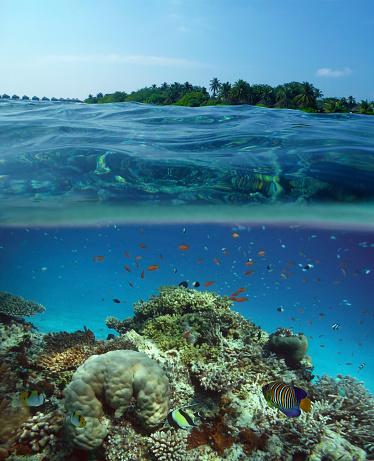 サンゴ「Colourful fish on coral reef & island, Maldives.」:スマホ壁紙(17)