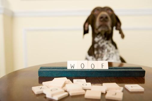 Pointer - Dog「Dog with word game」:スマホ壁紙(19)