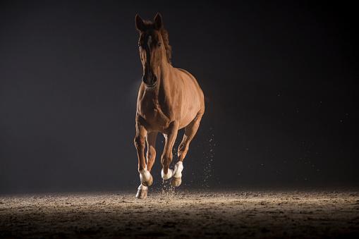 Horse「Horse galloping」:スマホ壁紙(13)