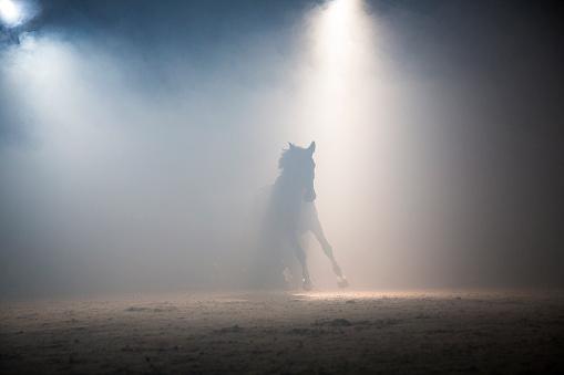 Horse「Horse galloping」:スマホ壁紙(19)