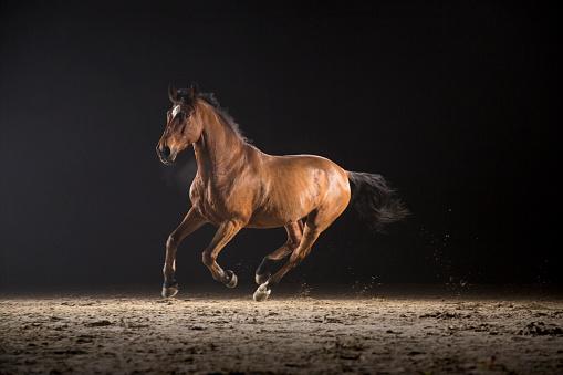 Racehorse「Horse galloping」:スマホ壁紙(16)