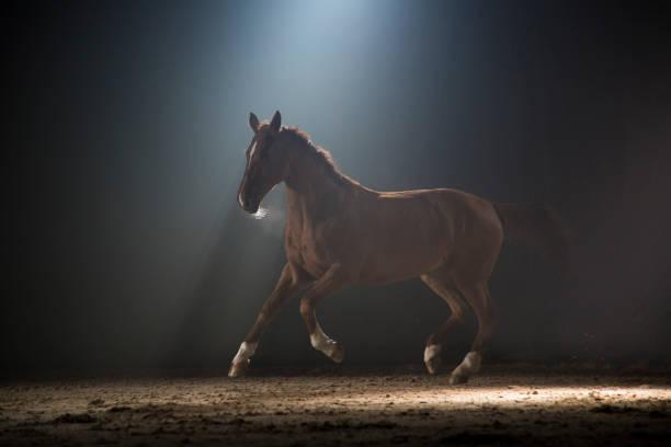Horse galloping:スマホ壁紙(壁紙.com)