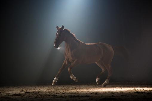 Horse「Horse galloping」:スマホ壁紙(6)