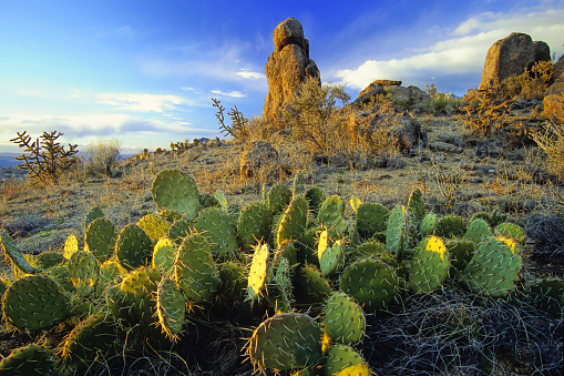 Prickly Pear Cactus「desert with cactus and rock formation landscape sunset」:スマホ壁紙(19)