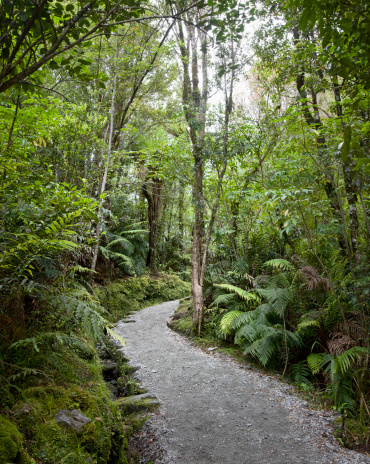 Franz Josef Glacier「Temperate Rain Forest, New Zealand」:スマホ壁紙(11)