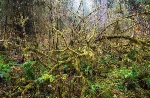 Olympic Rainforest「Temperate rainforest vegetation」:スマホ壁紙(7)