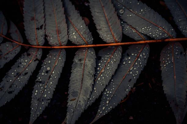 Leaf of Staghorn sumac, close-up:スマホ壁紙(壁紙.com)