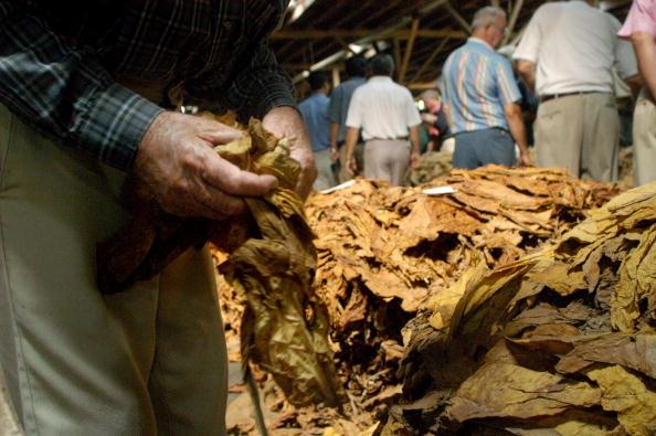 Tobacco Crop「Tobacco Auctions Open In North Carolina」:写真・画像(8)[壁紙.com]