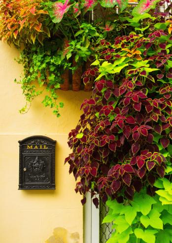 Charleston - South Carolina「USA, South Carolina, Charleston, Close up of house wall with ivy and mailbox」:スマホ壁紙(11)
