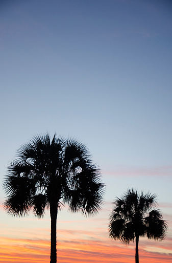 Charleston - South Carolina「USA, South Carolina, Charleston, Silhouette of palm trees against sky at sunset」:スマホ壁紙(6)