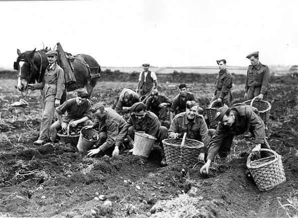 Working Animal「Army Harvest」:写真・画像(15)[壁紙.com]