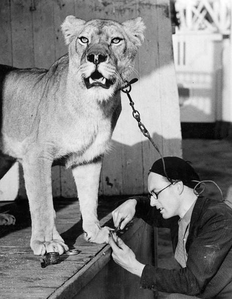 Fred Morley「Pet Manicure」:写真・画像(5)[壁紙.com]