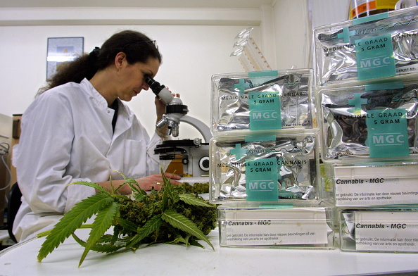 Cannabis Store「Cannabis Legally Cultivated in Netherlands」:写真・画像(12)[壁紙.com]
