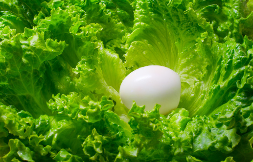 Animal Egg「Egg and green lettuce salad」:スマホ壁紙(8)