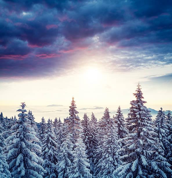 日の出の冬の森:スマホ壁紙(壁紙.com)