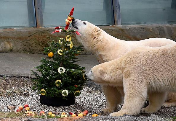 Christmas Decoration「Christmas At Hanover Zoo」:写真・画像(6)[壁紙.com]