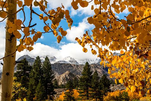 インヨー国有林「Eastern Sierra Fall Color」:スマホ壁紙(4)