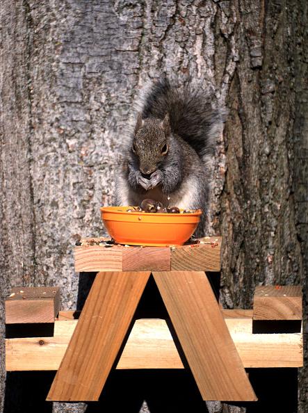 Gray Squirrel「Squirrel In The Morning Sun」:写真・画像(5)[壁紙.com]