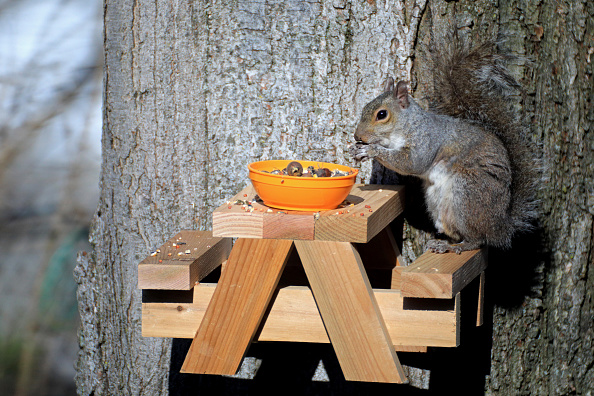 Gray Squirrel「Squirrel In The Morning Sun」:写真・画像(8)[壁紙.com]