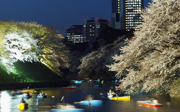 夜桜「Toyko Blossoms Early」:写真・画像(1)[壁紙.com]