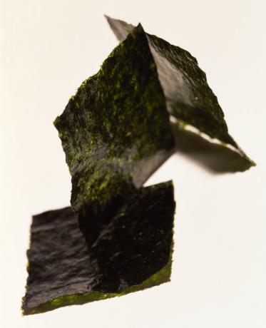 Algae「Nori seaweed」:スマホ壁紙(19)