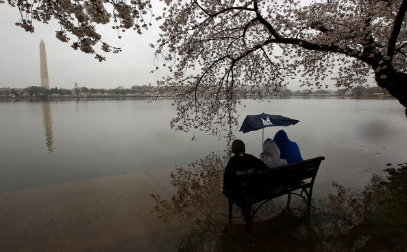 Washington DC「Cherry Blossom Festival Celebrates Washington's Symbol Of Spring」:写真・画像(16)[壁紙.com]